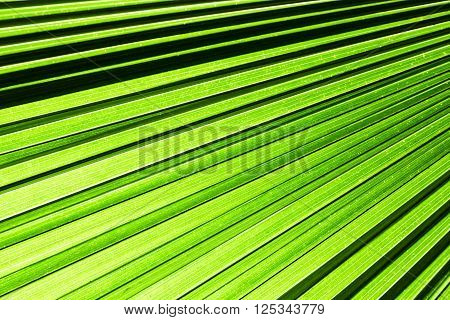 Abstract green leaf texture for background and texture
