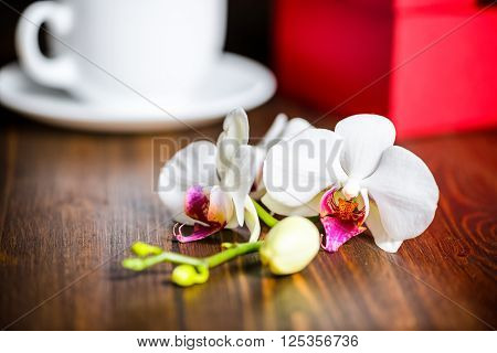 Beautiful Festive Concept Of Greeting Red Box With Bow, Orchid Flower, Phalaenopsis And Cap Of Tea O
