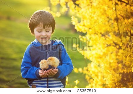 Sweet Cute Child, Preschool Boy, Playing With Little Newborn Chicks In The Park