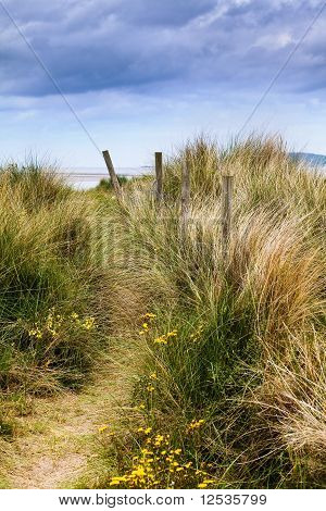 Dunes And Grass