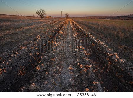 Beautiful Sunrise in the steppe over the Dirt road. Summer landscape.