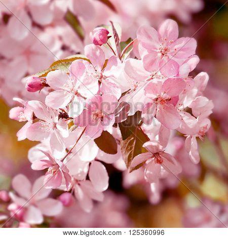 Blooming tree. Closeup shot.