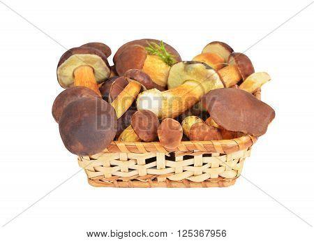 Boletus Edulis Mushroom In Basket, Dof
