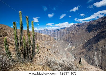 The canyon Colca is the deepest in the world