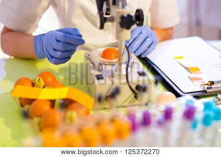 Quality control expert inspecting at chicken eggs in the laboratory selective focus