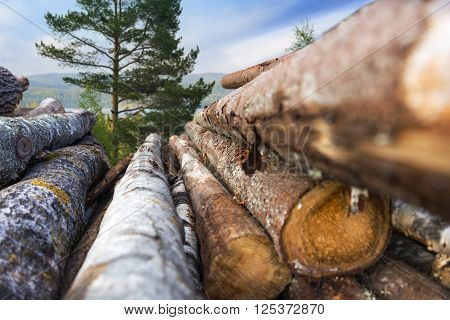 stack of tree trunks with scandinavian forest landscape in background