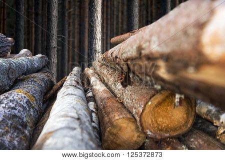 stack of tree trunks with scandinavian pine forest in background