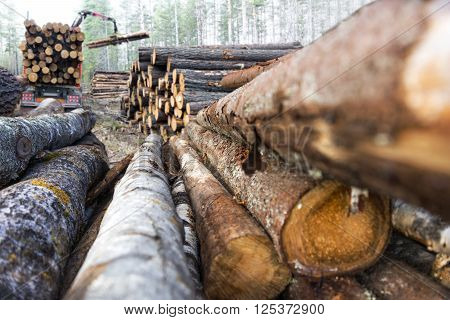 stack of tree trunks with truck loading timber in background