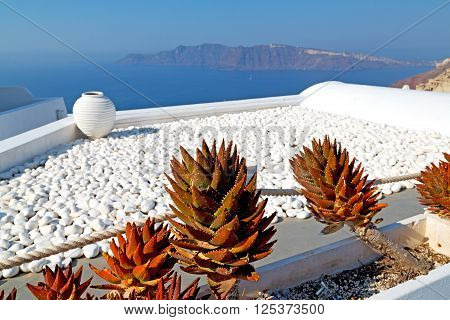 Flowers  In Architecture    Europe Cyclades Santorini