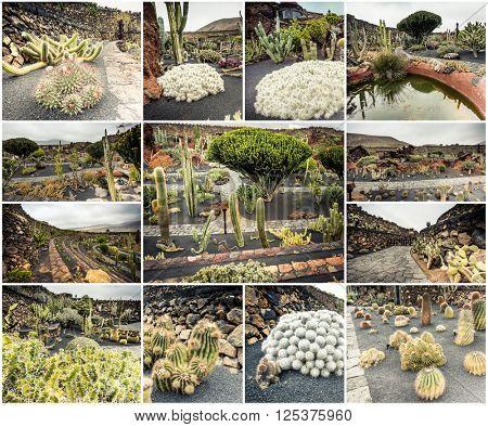 amazing sights of Lanzarote cactus farm