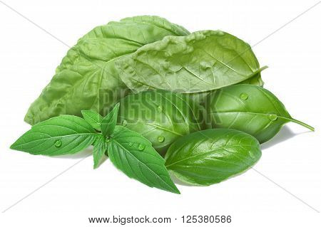 Basil Leaves, Different Cultivars