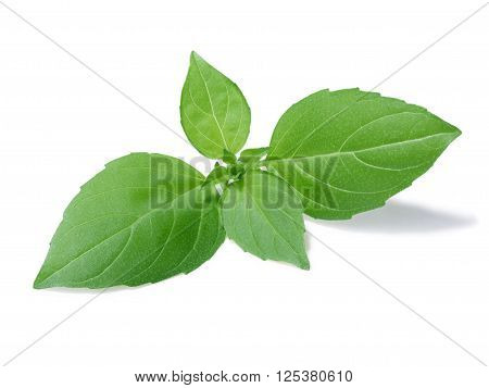 Spice Globe Basil Leaves