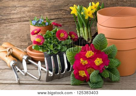 Gardening tools and flowers on weathered wood ** Note: Soft Focus at 100%, best at smaller sizes