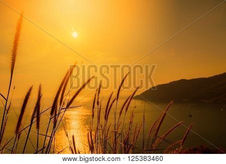 Grass field with viewpoint sea background at sunset. Selective focus. Vintage tone
