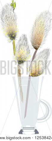 illustration with pussy willow in glass isolated on white background