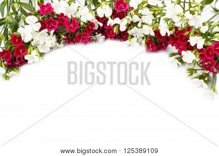 Carnation (Dianthus chinensis) flowers closeup white and red isolated on white