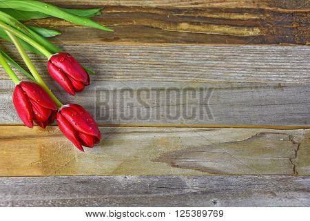 red tulips with water droplets on weathered wood