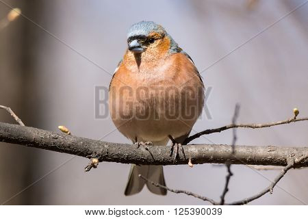 The photo depicts a finch on a branch