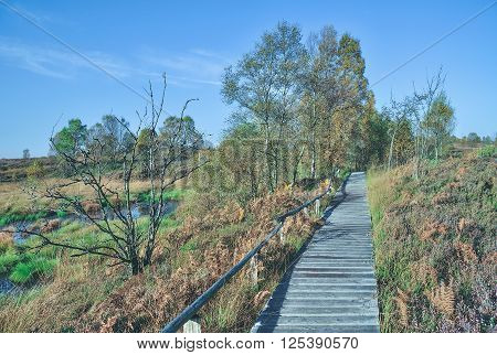 wooden Footpath through famous Moor in Eifel National Park near Monschau called Hohes Venn,Germany