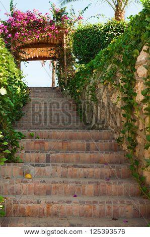 Garden Stairway With Floral Trellis