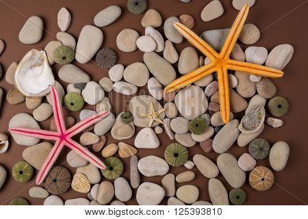 background with seashells pebbles and color starfish