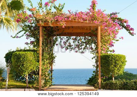 Fuschia Flowers Climbing A Wooden Trellis Archway Facing The Ocean