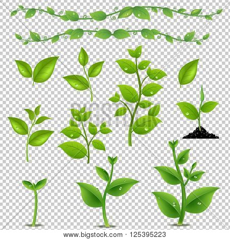 Green Leaves And Plants Set, Isolated on Transparent Background, With Gradient Mesh, Vector Illustration
