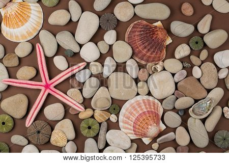 Background of pebbles different shells and starfishes