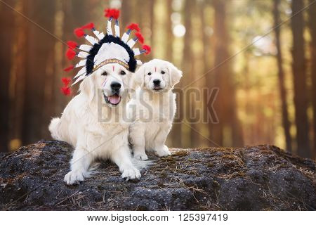 adorable golden retriever dog with a puppy in a native american headdress