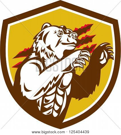 Illustration of a smirking California grizzly North American brown bear his paw raised viewed from the side with claw marks in the background done in retro style set inside crest shield.