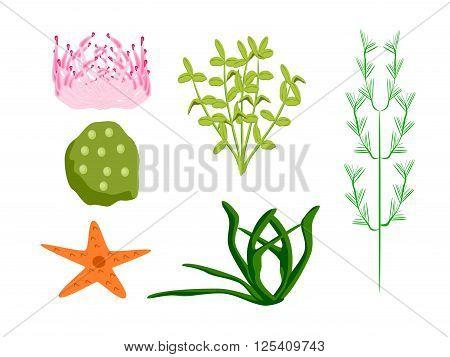 ocean plants starfish anemone sponge, vector, png format,