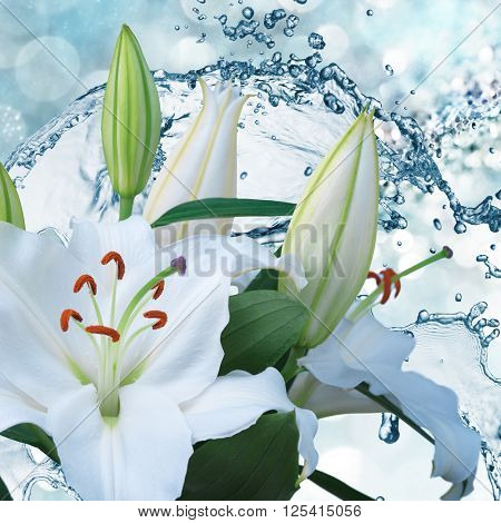 Flower white lily on a background of water splash