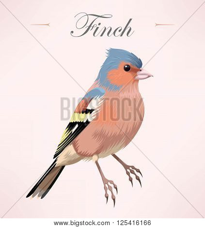 Vector illustration of beautiful high detailed finch