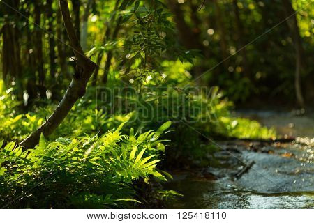 Tropical fern under sunlight in a wet rainforest
