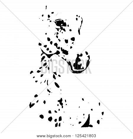 Graphic image of a thoroughbred horse on a white background. Horse black and white (spotted) suit. Drawing a horse head vector