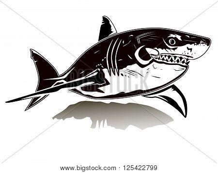 Shark White