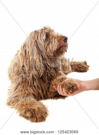 Photo of a handshake with a brown dog