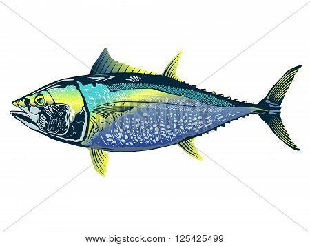 Tuna Detailed Colored Realistic