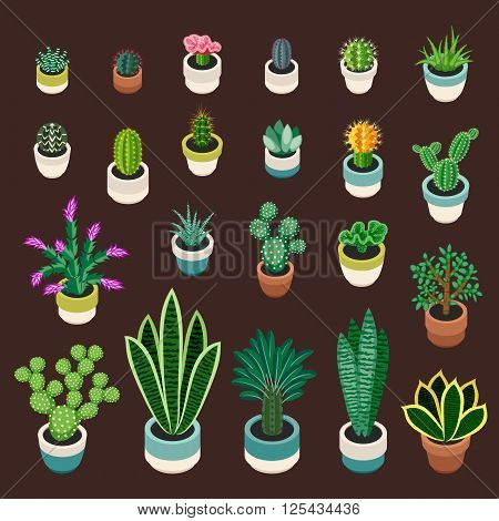 Big set of cactuses and succulents in pots. Cactuses and succulents isolated on brown background. Indoor plants in a flat style. Vector illustration.