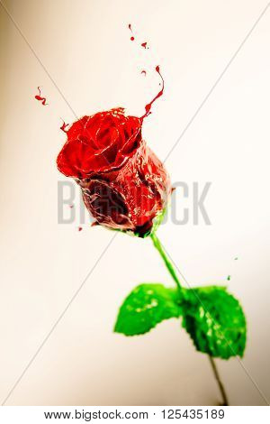Red paint made beautiful rose with green leaves on orange background