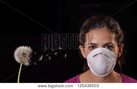 Woman using protective mask from spring allergy season dandelion pollen plant.