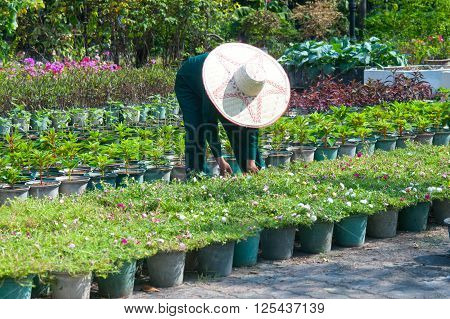 Worker with Ross Moss seedlings in pots. ** Note: Soft Focus at 100%, best at smaller sizes