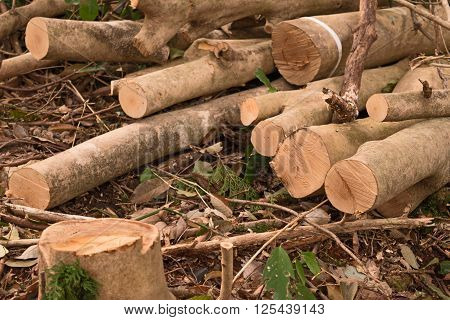 Pile of logs in the forest. Logs and Driftwood lying on grass
