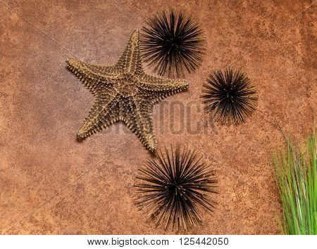 Nice amazing stylish closeup view of interior textured wall decorated with natural starfish and dark metallic sea urchins