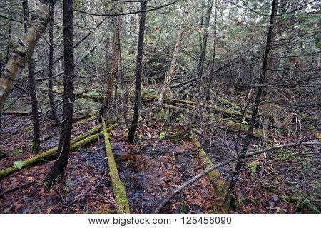 The forest of the Naas-Raunecker Nature Preserve in Harbor Springs, Michigan