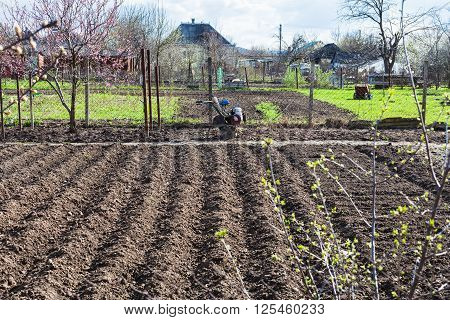 Plowed Vegetable Beds And Tiller In Village