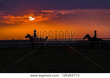 Race Horses Training Silhouetted