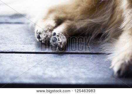 Abstract Animal Background,foots Of Brown Pomeranian