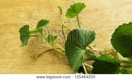 Centella Asiatica On Wood Background