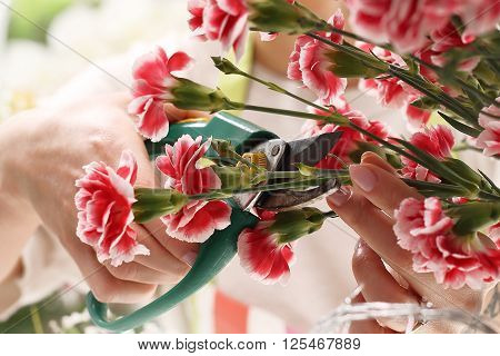 Pink, cutting flowers with pruning shears .